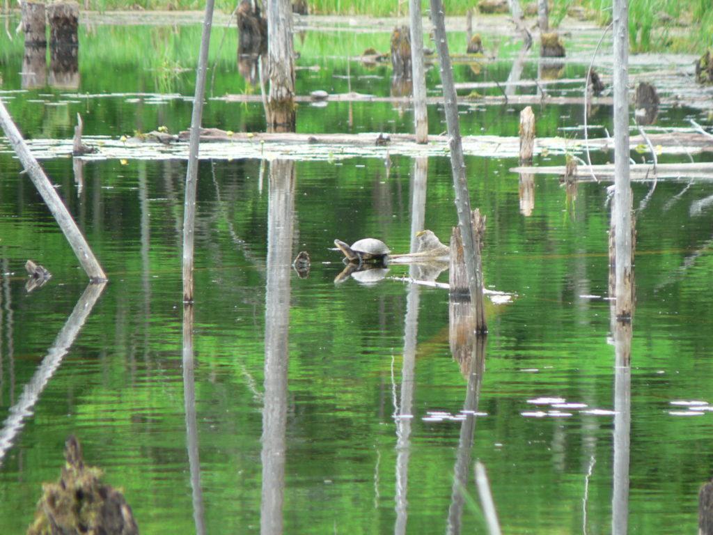 turtle on river tree
