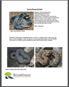 Hog-nosed Snake Fact Sheet